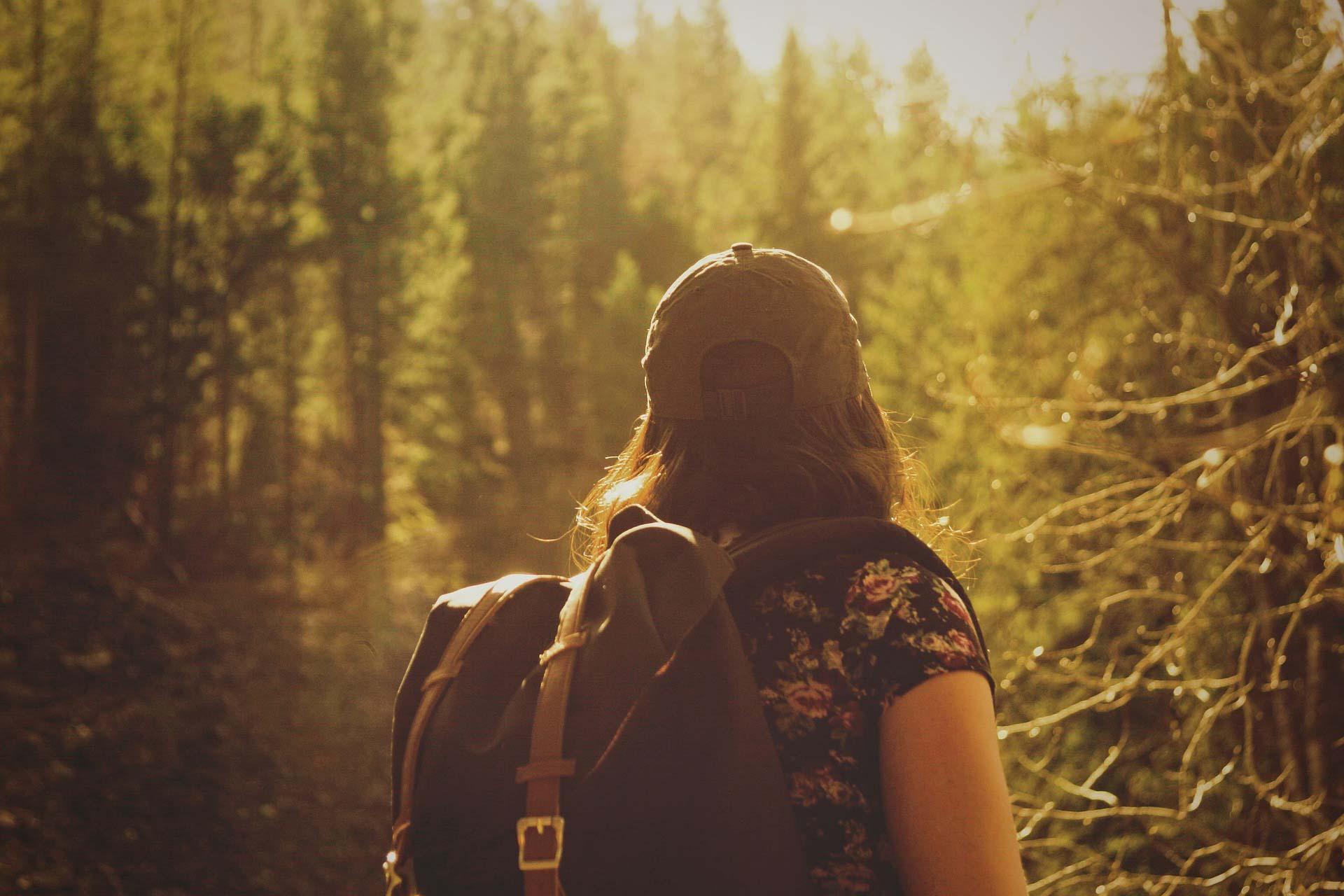 Wandern auf dem Forststeig