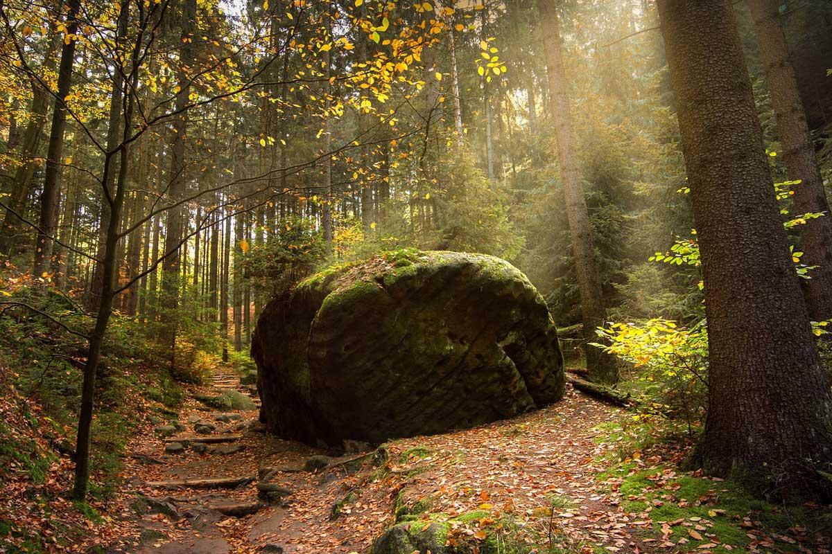 Romantische Wanderwege durch den Wald