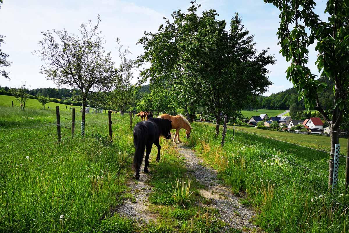 Pferde im Grünen
