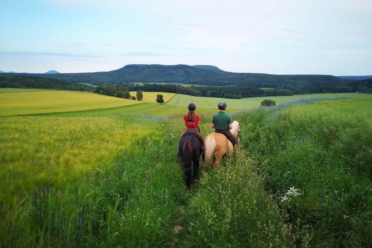 Pferdeausritt mit Panoramablick